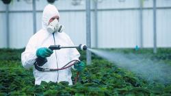 Можно ли сжечь растение инсектицидом: правила применения веществ