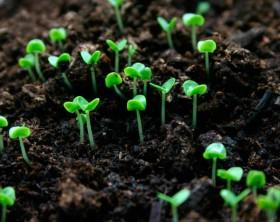 Особенности применения органических удобрений для дачи. Чем новый тренд лучше привычных?