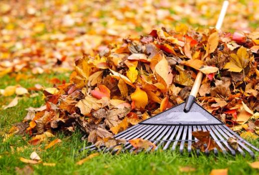 Как натурально улучшить состояние почвы лиственным перегноем