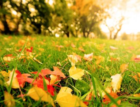 Какими удобрениями подкармливать осенью