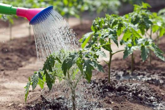 Какое время самое благоприятное для полива овощей