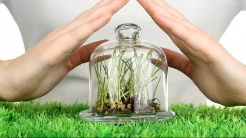 Какие бывают разновидности гербицидов