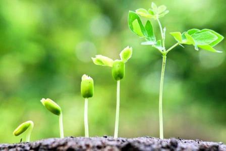 Что такое стимуляторы роста растений