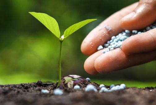Польза фосфорных удобрений