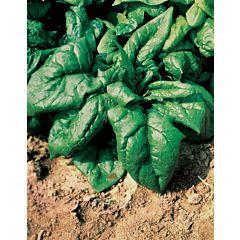 ЛАГОС F1 / LAGOS F1 - шпинат, Clause (Agrolife)
