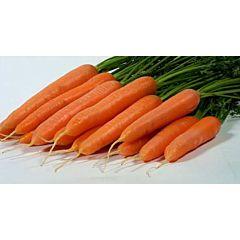 ЛАГУНА F1 / LAGUNA F1 - морковь, Nunhems