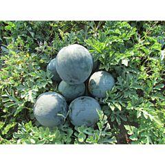 LS 1545 F1 – Арбуз, Lucky Seed