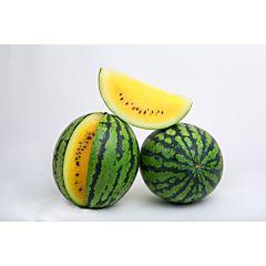 ПОКЕМОН (ЛС 1809) F1 / POKEMON (LS 1809) F1 – Арбуз, Lucky Seed