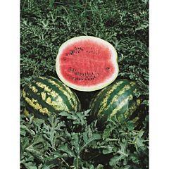 КРИМСОН СВИТ / CRIMSON SWEET – арбуз, Hollar Seeds