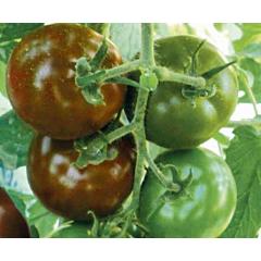 МАВР F1 / MAVR F1 — Томат Индетерминантный, Lark Seeds