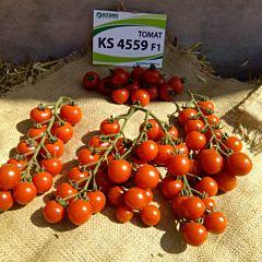 КС 4559 F1 / KS 4559 F1 - Томат Индетерминантный, Kitano Seeds