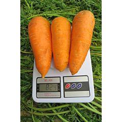 БОЛТЕКС / BOLTEX - морковь, Clause (Agrolife)
