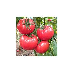 ЛЕДА F1 / LEDA F1 — Томат Полудетерминантный, Yuksel Seeds