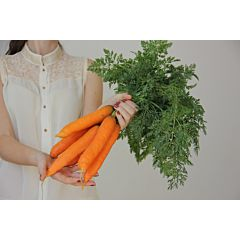 ГРЕТА F1 / GRETA F1 – Морковь, Lucky Seed