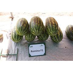 РОМИНА F1 / ROMINA F1 – арбуз, Cora Seeds