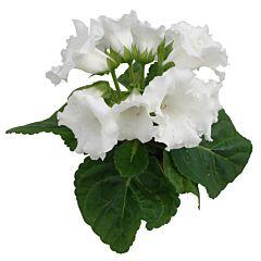 Глоксиния MultiBells White F1, Sakata