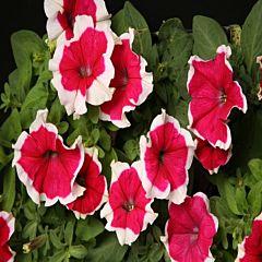 Петуния крупноцветковая Hulahoop Red F1, Sakata