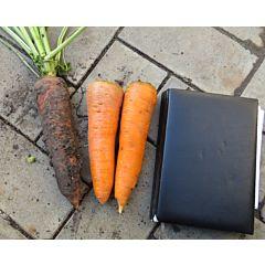 СКАРЛА / SCARLA - морковь, Clause (Agrolife)