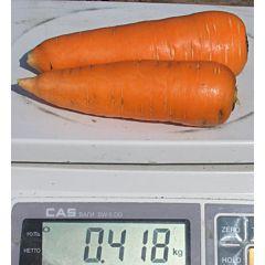 ШАНТАНЕ / CHANTENAY - морковь, Clause