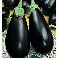 ВИЗИР F1 / VIZIR F1 — Баклажан, Yuksel Seeds