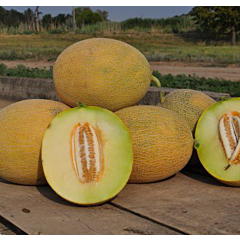 РАДМИЛА F1 / RADMIRA F1 — Дыня, Yuksel Seeds