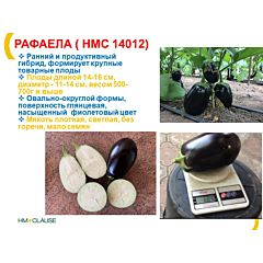 РАФАЕЛА (HMC 14012) F1 / RAFAELA (HMC 14012) F1 - Баклажан, Clause