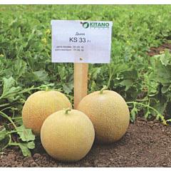 КС 33 F1 / КС 33 F1 - Дыня, Kitano Seeds