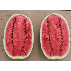 ES 75126 F1 - Арбуз, Ergon seeds