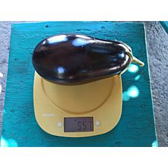 PL 6760 F1 - Баклажан, Ergon seeds