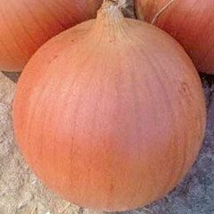 КЕЙС F1 / KEYS F1 — Лук Репчатый Озимый, Lark Seeds