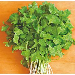 СЛОУБОЛТ / SLOUBOLT - Кориандр салатный, Hem Zaden (Професійне насіння)