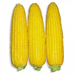 ДОБРЫНЯ F1 / DOBRINIYA F1 - Кукуруза, Lark Seeds (Професійне насіння)