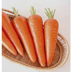 АБАКО F1 / ABAKO F1 - Морковь, Seminis (Професійне насіння)