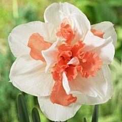 Нарцисс My Story,  Florium