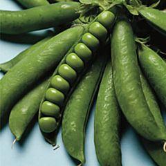 НЕЛЬСОН / NELSON - Горох Овощной, Lark Seeds