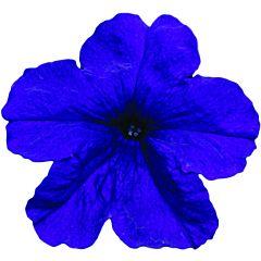 Петуния крупноцветковая Eagle Blue F1, Sakata