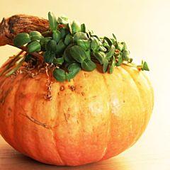 Набор для выращивания микрозелени подсолнуха на 2 урожая, Микрогрин