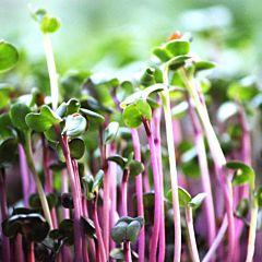 Набор для выращивания микрозелени красного редиса на 2 урожая, Микрогрин