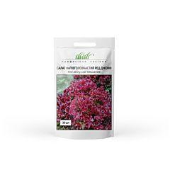 РЕД ДЖЕННИ / RED DZENNI - Салат, Wing Seed (Професійне насіння)