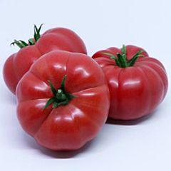 СОНАРОЗА F1 / SONAROZA F1 — Томат Полудетерминантный, Yuksel Seeds