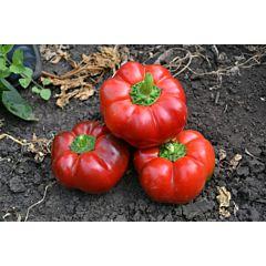 РЕД БУЛЛ F1 / RED BULL F1 — Перец Сладкий, Lark Seeds