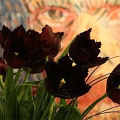 Тюльпан Vincent van Gogh,  Florium