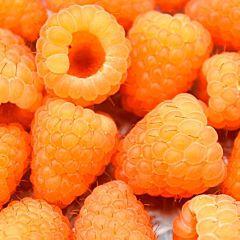 Саженцы малины Валентина, желтая раннеспелая (Професійне насіння)