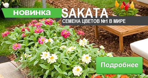 Семена Саката