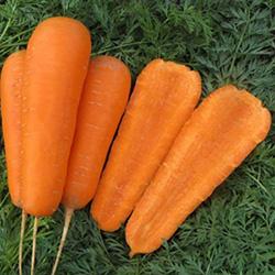 Морковь Боливар