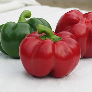 Перец типа Ротунда семена