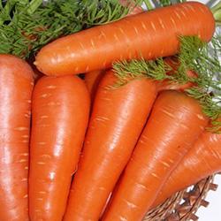 Абако - морковь