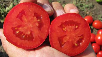 Пьетра Росса томат